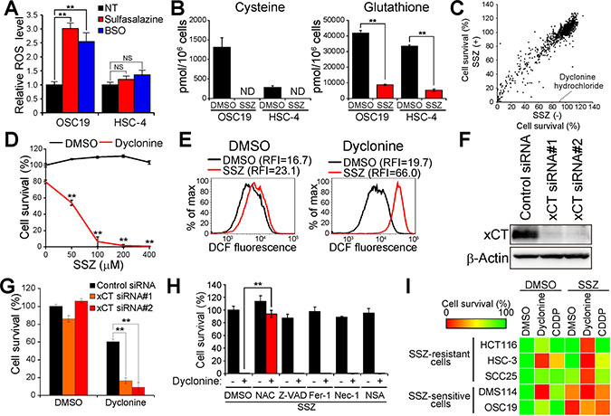 Screening for drugs that sensitize cancer cells to sulfasalazine.
