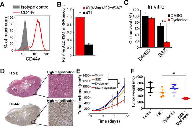 Dyclonine enhances the antitumor effect of sulfasalazine on the tumors formed by ALDH3A1-expressing gastric cancer stemlike cells.
