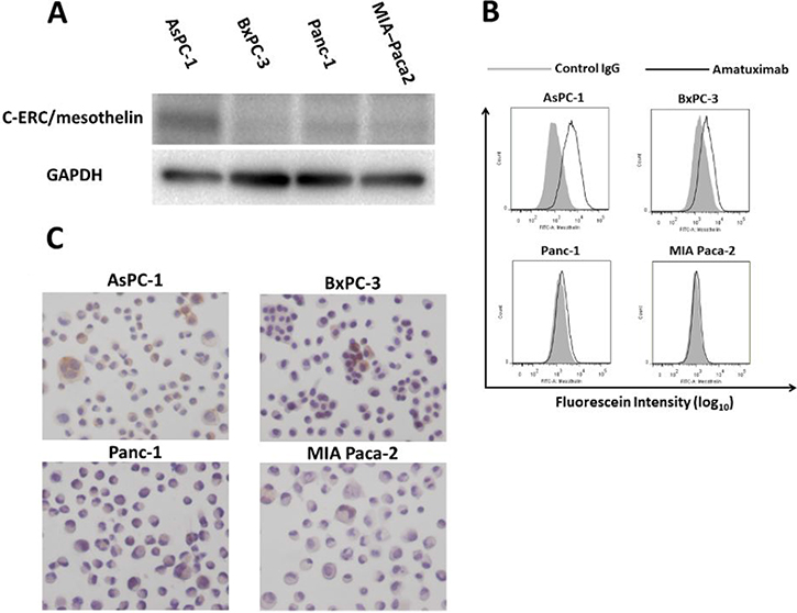 Comparison of mesothelin expression in human pancreatic cancer cell lines.