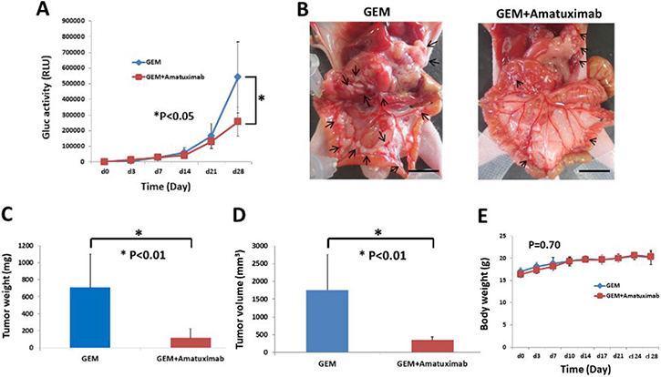 Combination therapy of GEM and amatuximab enhances anti-tumor effects against isolated cancer cells in an AsPC-1-Gluc peritoneal metastasis mouse model.