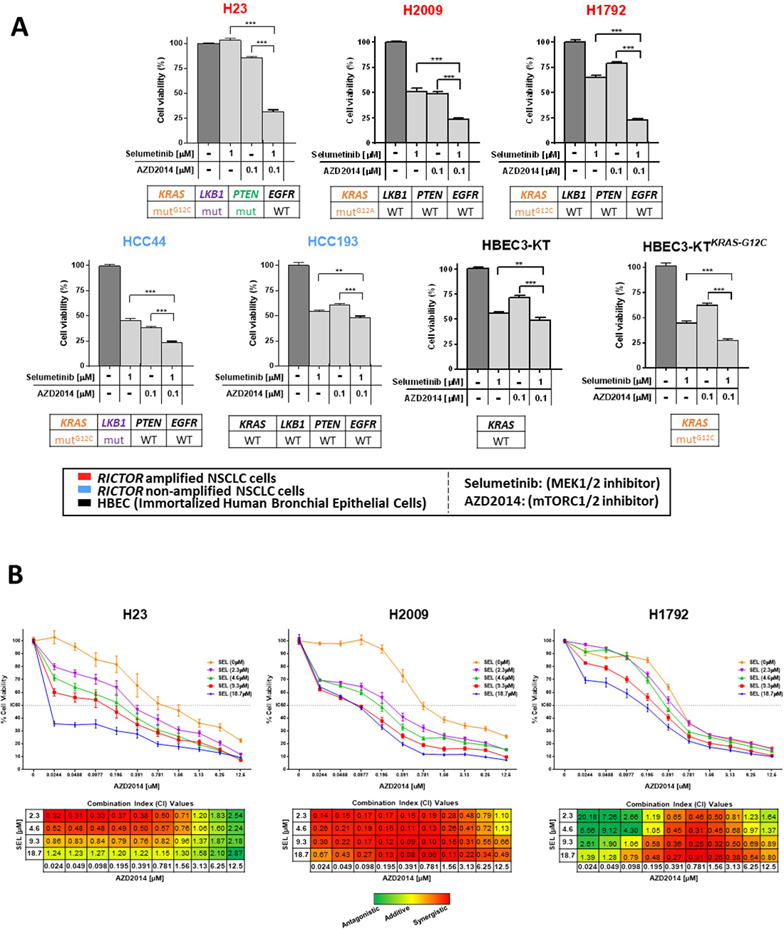 Combined mTORC1/2 and MEK inhibition is an effective therapeutic approach in RICTOR/KRAS-altered settings and results in synergistic anti-tumor effects.