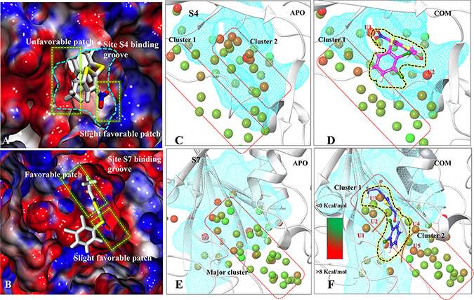 Characterization of binding sites via electrostatic potential calculations and water-map analysis.