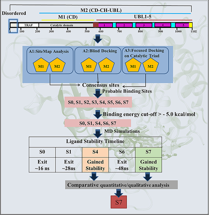 Scheme 1: Schematic representation of the protocol used for the identification of most likely binding site and the binding mode of inhibitor P5091 on M1 and M2.