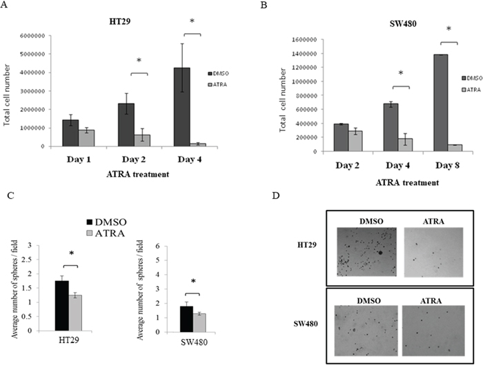 ATRA treatment of both HT29 and SW480 colon cancer cell lines inhibited cell proliferation and decreased sphere formation.