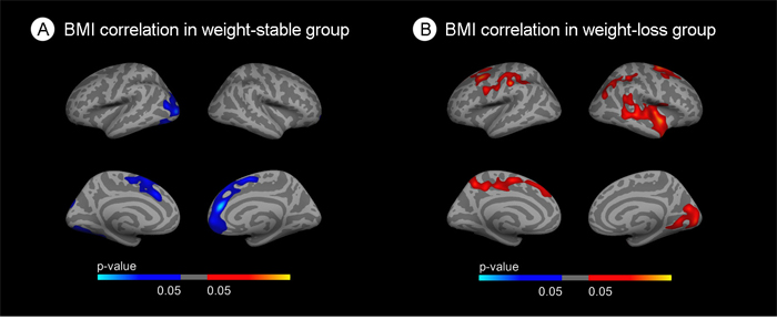 Stratified correlation analysis between body mass index and cortical thickness.