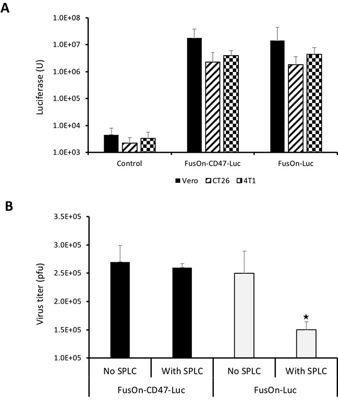 Comparison of FusOn-CD47-Luc and FusOn-Luc for luciferase expression and ability to evade clearance by phagocytes.