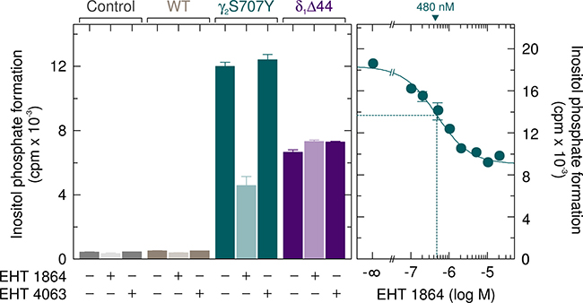 The enhanced basal activity of PLCγ2S707Y is specifically reduced by the Rac inhibitor EHT 1864.