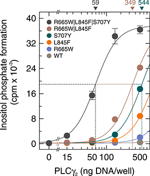 Mutations in PLCG2 R665W, L845F, and S707Y synergize to promote enhancement of basal PLCγ2 activity.