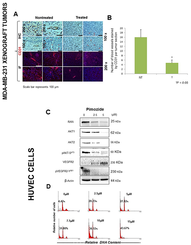 Pimozide inhibits the expression of angiogenesis related markers in vivo and induced apoptosis in HUVEC endothelial cells.