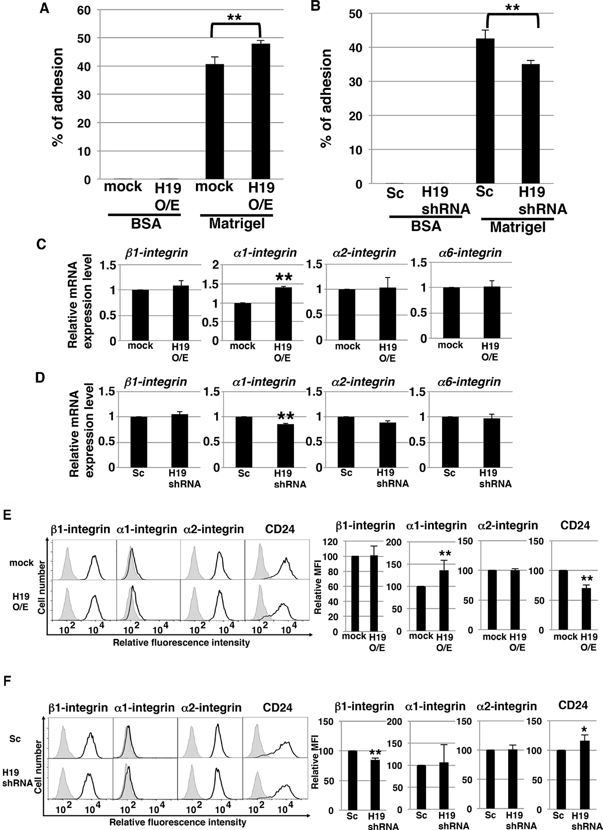 H19 contributes to cell adhesion through regulation of CD24 and integrin expression in PDAC cells.