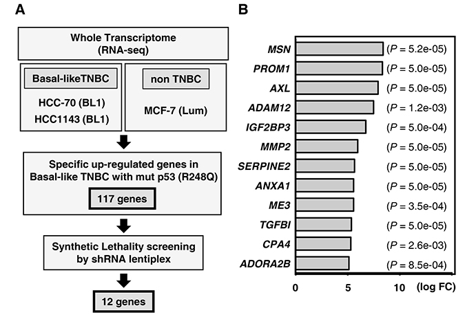 Gene expression profiling to identify synthetic lethal genes in TP53-mutated TNBC.