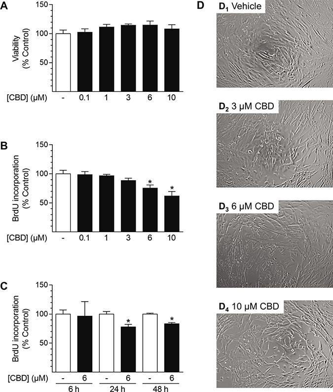 Effect of CBD on viability and proliferation of HUASMC.