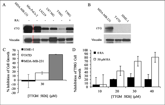 Expression levels of tTG in cancer cells and the effect of TTGM 5826 upon increasing tTG expression.