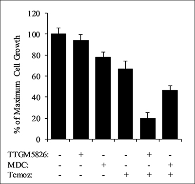 TTGM 5826 synergizes with temozolomide to inhibit the growth of U-87 MG cells.
