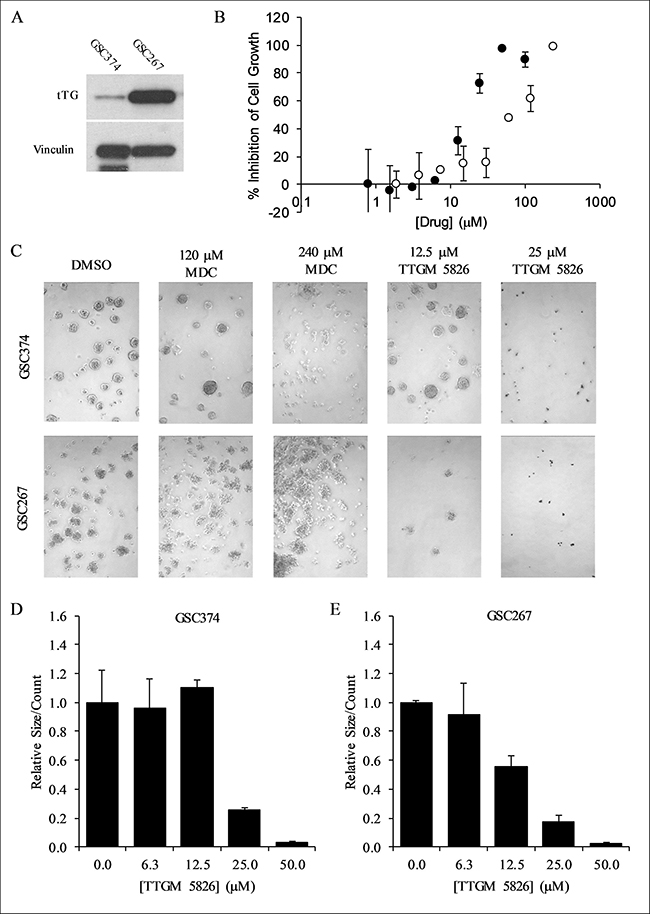 TTGM 5826 inhibits the growth and sphere forming abilities of GSCs.