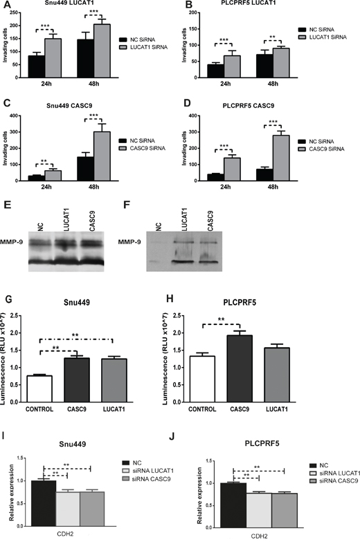 CASC9 and LUCAT1 are involved in cancer cells invasion.