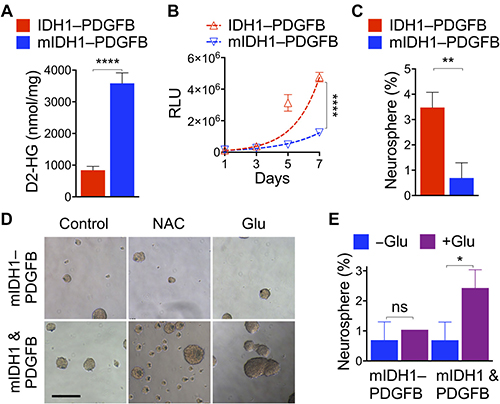 IDH1R132H overrides oncogenic PDGFB in tandem expression.