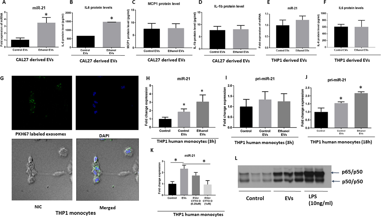 Uptake and biological activity OSCC derived EVs in human THP1 monocytes.