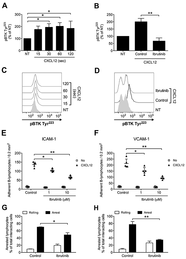 BTK is activated by CXCL12 and mediates adhesion to ICAM-1 and VCAM-1 in normal B-lymphocytes.