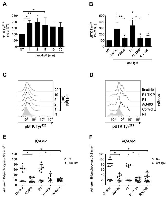 JAK2-dependent BTK activation mediates BCR-triggered adhesion of normal B-lymphocytes.