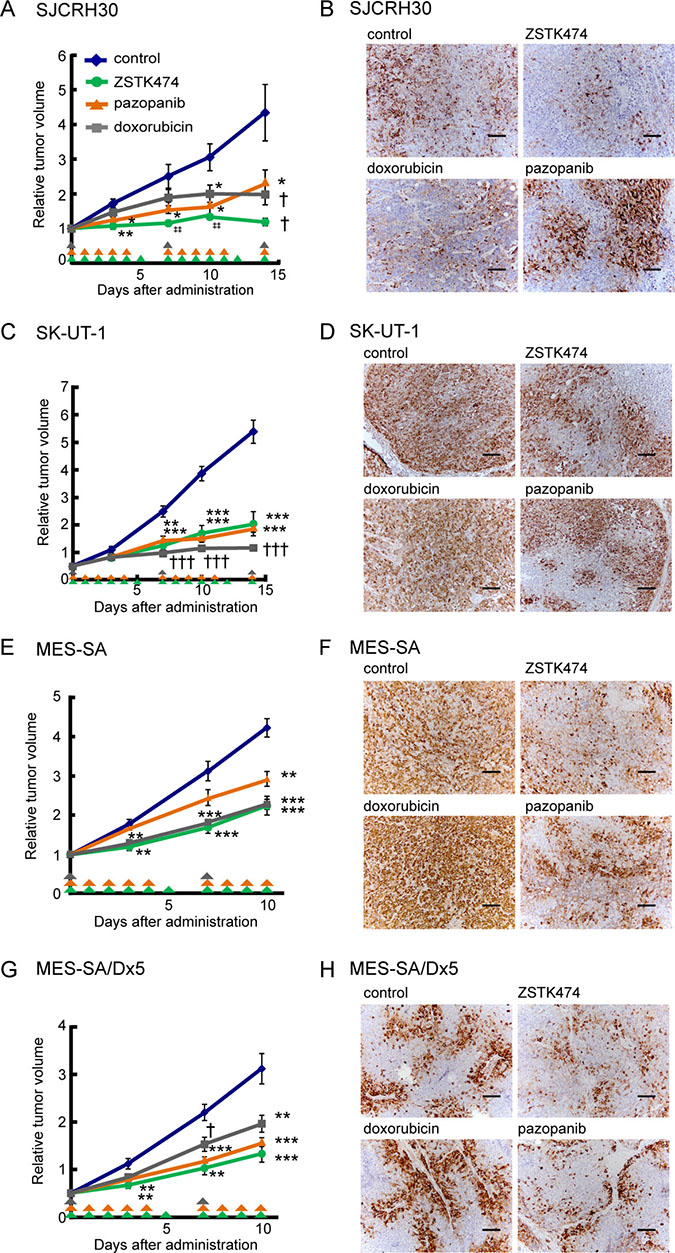 In vivo antitumor activity of ZSTK474 against sarcoma cell lines and the multi-drug resistant cell line (MES-SA/Dx5), in comparison to conventional antitumor drugs clinically used for sarcoma.