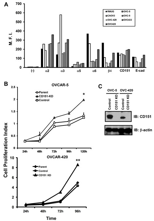 CD151 expression and its role in ovarian tumor cell proliferation.