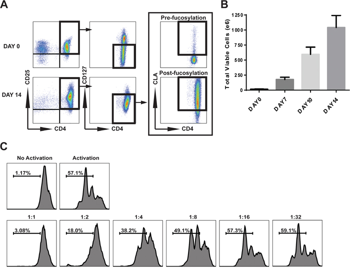 Characterization of clinical ex-vivo expanded CB Tregs.