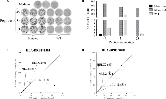 Detection of tumor-associated neopeptides-specific CD4+ T cell responses.