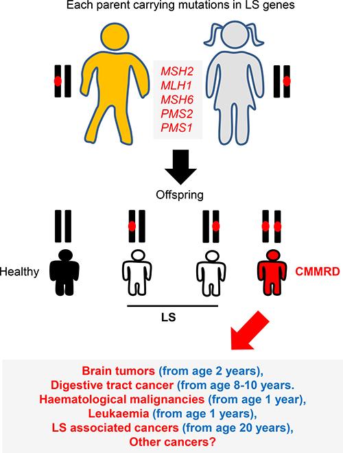CMMRD genetics.