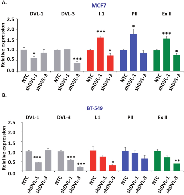 DVL loss of function alters aromatase transcript levels.