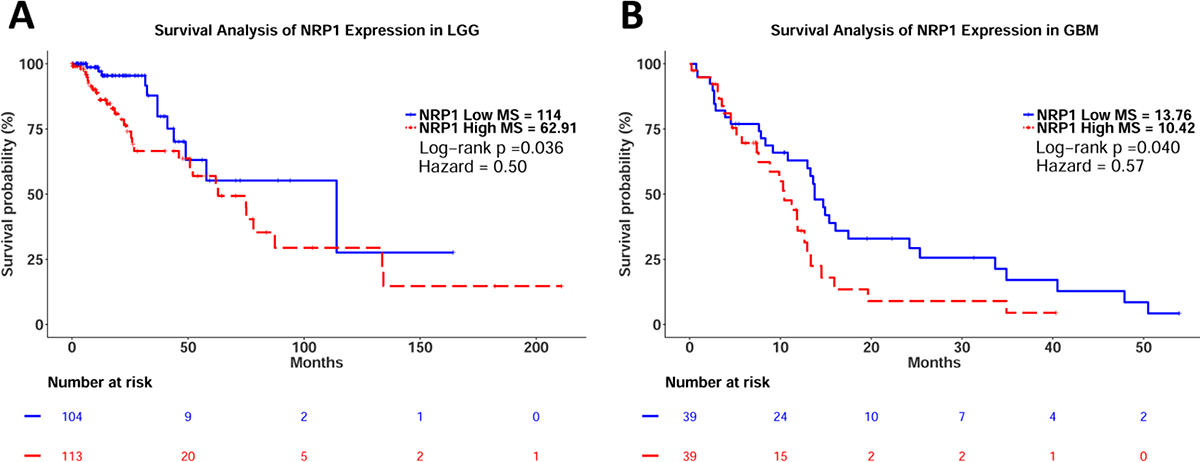 Kaplan–Meier survival analysis of relative NRP1 expression in LGG and GB.