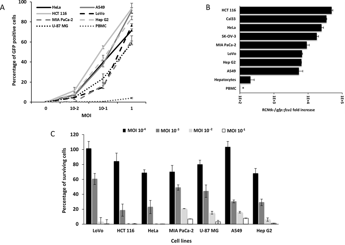 Infection, replication and oncolytic activity of RCNtk-/gfp::fcu1.
