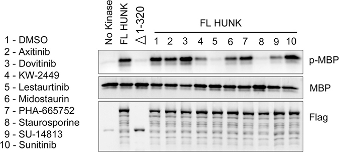 HUNK kinase assay testing the activity of compounds that bind to HUNK kinase domain.