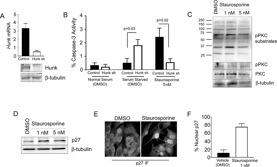 STU has similar activity in cells as HUNK inhibition.