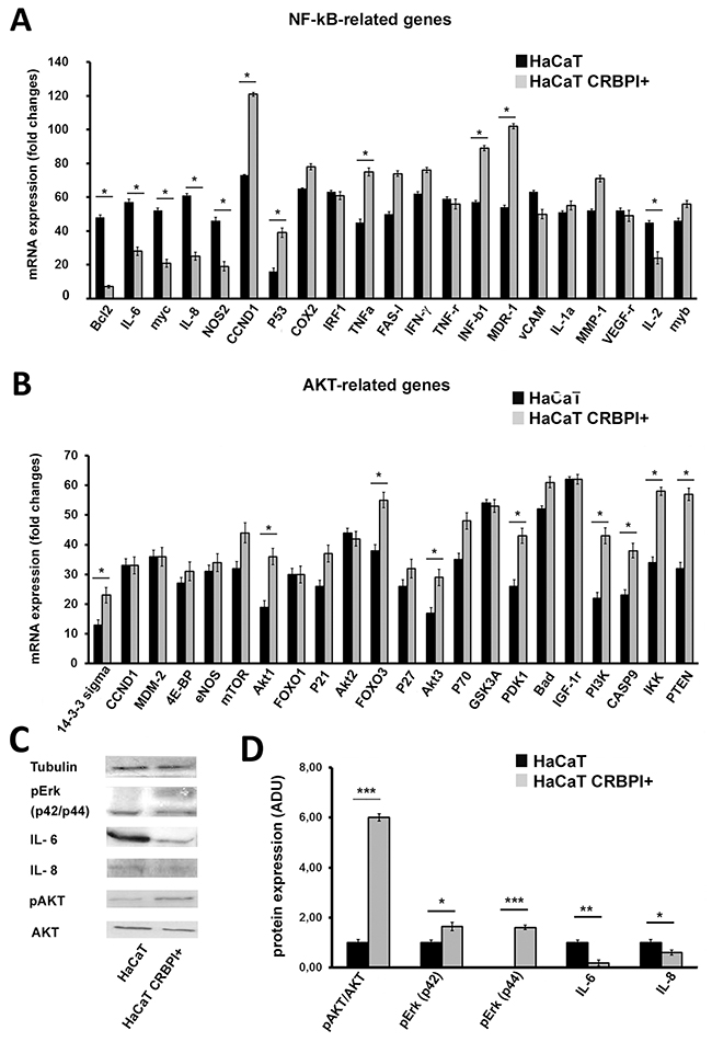 CRBPI transfection up-regulates NF-kB and AKT-related transcriptional gene pathway in HaCaT cells.