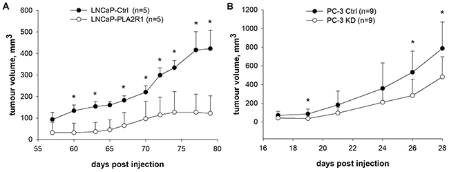 Tumour growth was tested in vivo in xenograft mouse models.