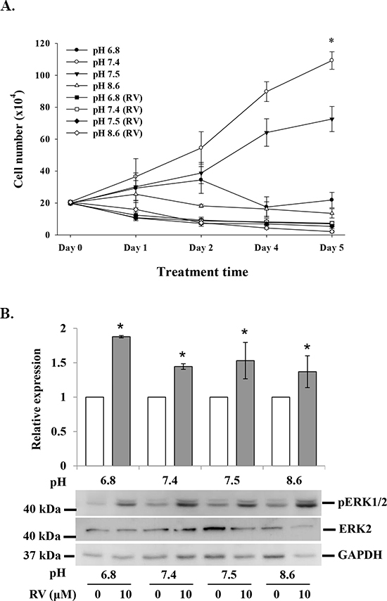 Effect of acid-alkaline culture conditions on resveratrol-induced anti-proliferation in MDA-MB-231 cells.