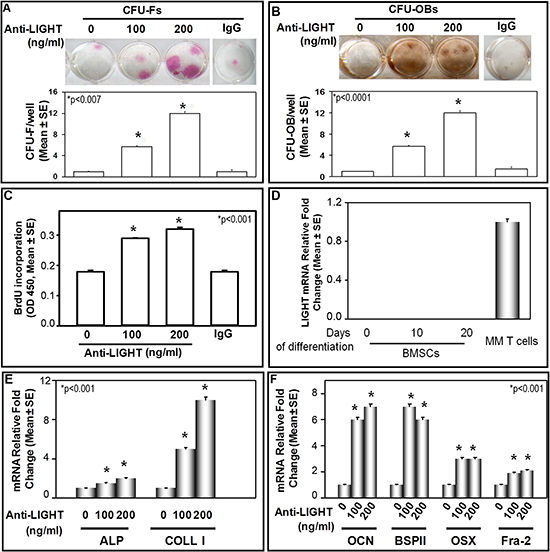 Anti-LIGHT mAb effect on CFU-F and CFU-OB formation in BMNC cultures of MM-bone disease patients.