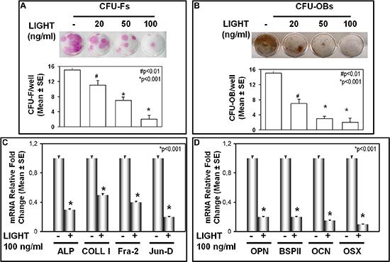 LIGHT effect on CFU-F and CFU-OB formation.