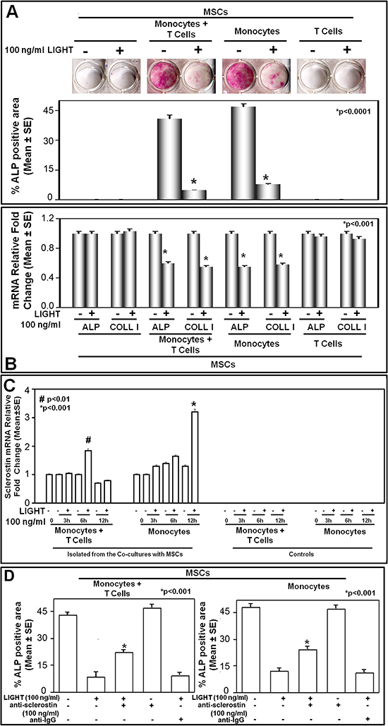 LIGHT effect on osteoblastogenesis in co-cultures of mesenchymal stem cells and monocytes with or without T-cells.