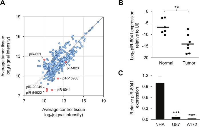 piRNA expression profiling results and confirmation of piR-8041 underexpression in GBM relative to normal brain tissue.