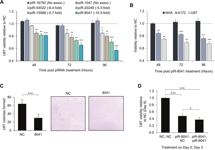 Reduction of GBM cell proliferation by piR-8041 and other GBM-underexpressed piRNAs.