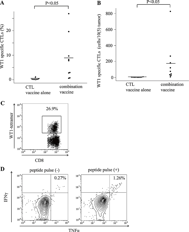 Tumor infiltrated WT1 tetramer+ CD8+ T cells.