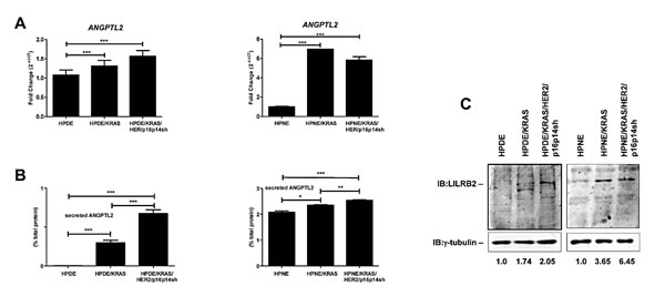Expression and secretion of ANGPTL2 and its receptor LILRB2 in the different steps of pancreatic carcinogenesis.