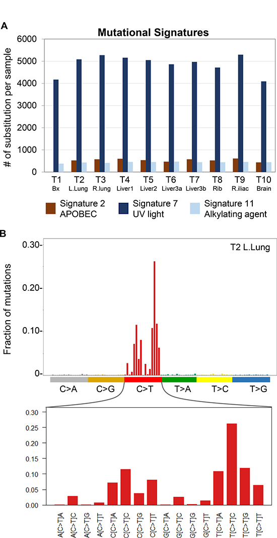 Detection of mutational signature profiles in metastatic IDCS.