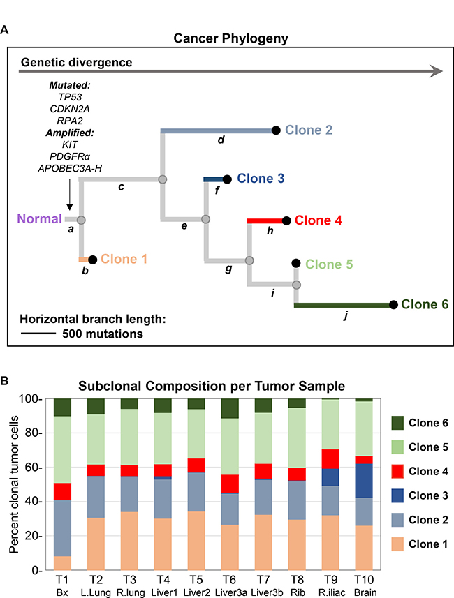 Analysis of cancer phylogeny and clonal evolution.