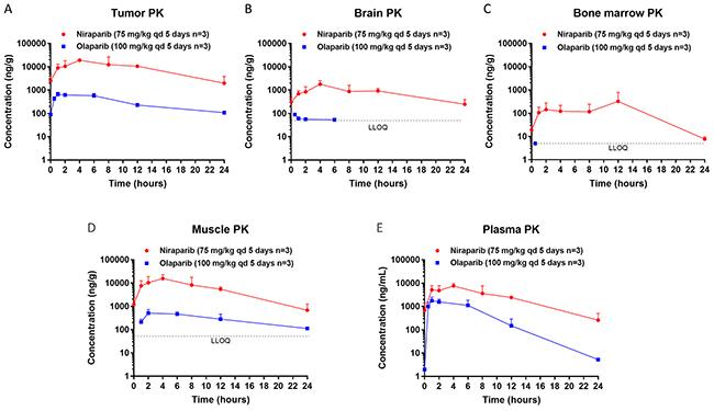 Steady state pharmacokinetics (PK) of niraparib and olaparib in tumor, brain, bone marrow, muscle, and plasma.