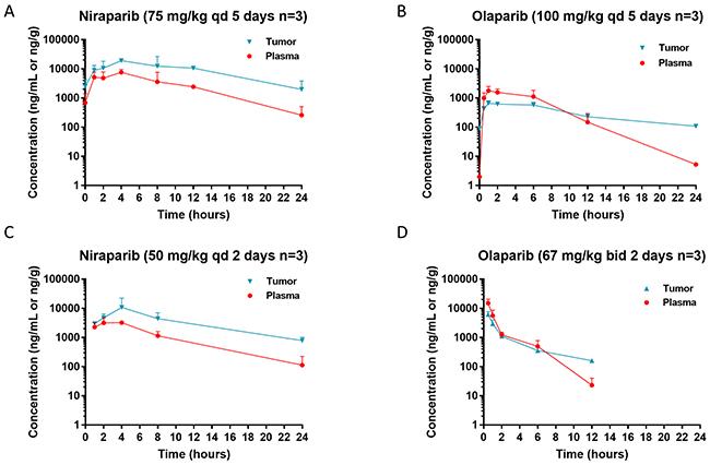 Steady state pharmacokinetics (PK) of niraparib and olaparib in tumor vs plasma.