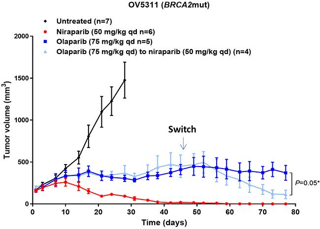 Effect of niraparib and olaparib on tumor volume in BRCA2mut OV5311 ovarian cancer PDX model.
