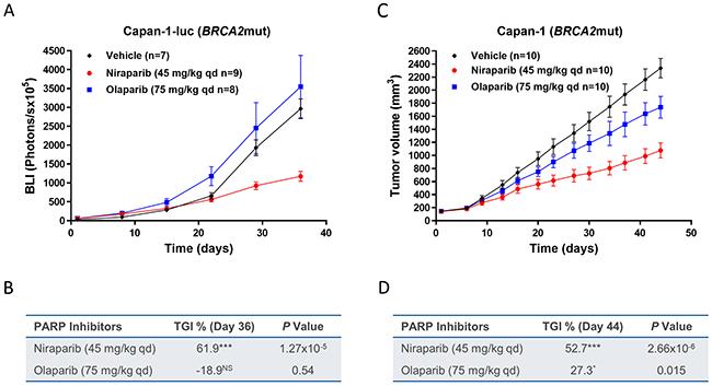 Effect of niraparib and olaparib on tumor growth in intracranial BRCA2mut Capan-1-luc or subcutaneous Capan-1 pancreatic cancer xenograft model.